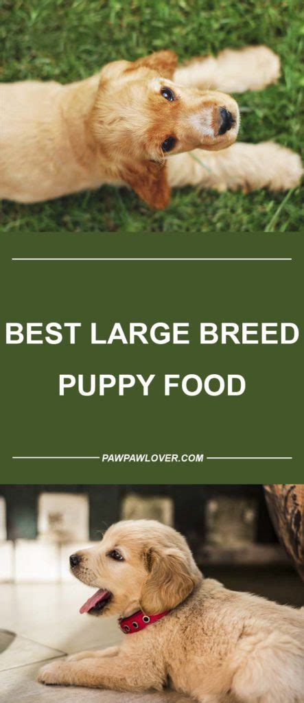 large breed puppy food  grain  top  review
