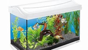 Aquarium Einrichten Anfänger : neues aquarium tipps f r einsteiger youtube ~ Lizthompson.info Haus und Dekorationen