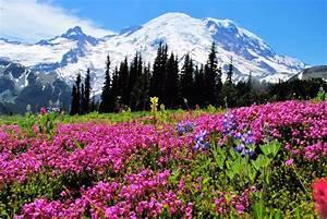 Mt Rainier NP 35 – flowers MowryJournal com
