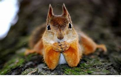 Funny Animals Wallpapers Animal Squirrel Tiere