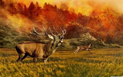Wildlife Desktop Wild 4k Wallpapers Call Hunter