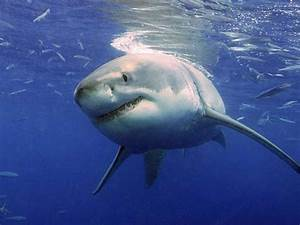 Strange Facts About Sharks Business Insider