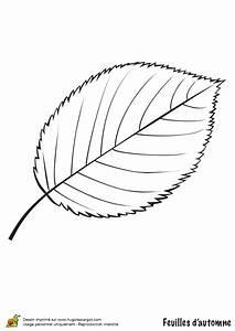 Feuilles D Automne à Imprimer : coloriage feuille de cerisier en automne ~ Nature-et-papiers.com Idées de Décoration