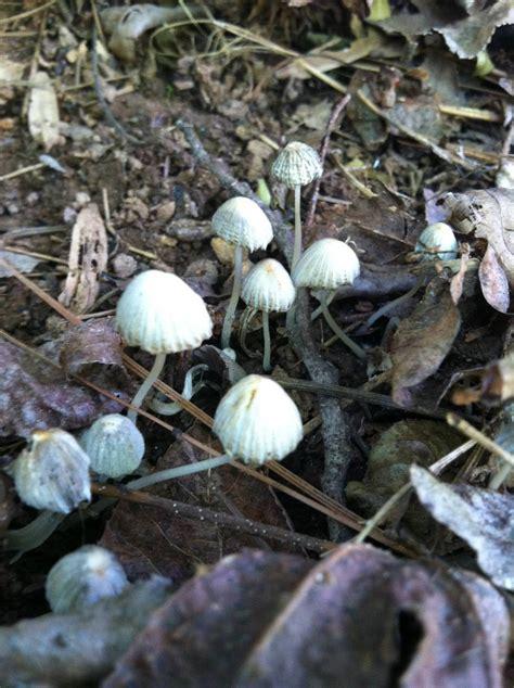Georgia Finds Need Help With Id Mushroom Hunting And