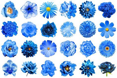 blaue blumen frühling blaue blumen und ihre bedeutung floraqueen deutschland
