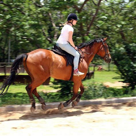 broke horses horse broken been mean does equinenow