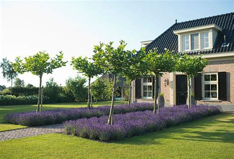 Broad Lavender Beds Lead To House For Added Drama Plant