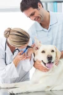 Veterinarian Client Patient Relationship