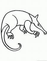 Anteater Template Coloring 123coloringpages Animal sketch template