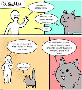 what to before getting a cat everyone needs to see this before they think about getting