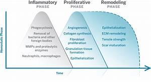 Organogenesis  Understanding Wounds