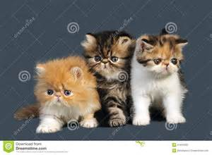 hair claws kittens stock photography image 21447032