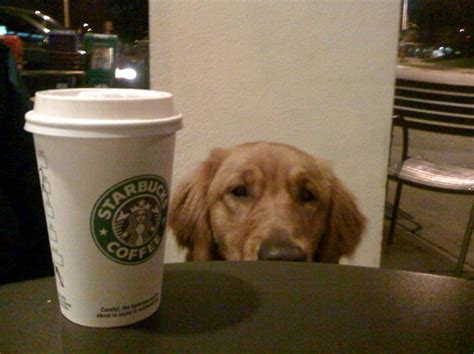 """Per 2.2 pounds of your pet's weight, 150 mg of caffeine is lethal. 10 Restaurants & Coffee Shops with """"Secret"""" Menu Items for ..."""