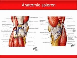 knie spieren