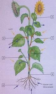 Bau Der Pflanze : arbeiten mit kerncurriculum und bildungsstandards bim 1 ~ Lizthompson.info Haus und Dekorationen