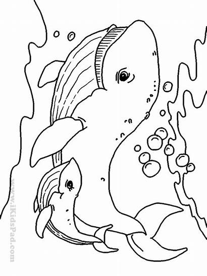 Coloring Sea Animal Pages Creatures Animals Printable