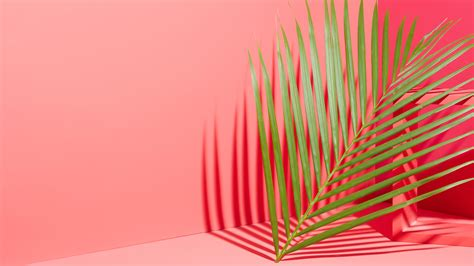 Pink + Palm Leaf Wallpaper For Your Phone + Desktop!