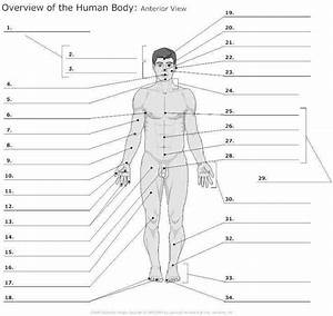 Anatomy And Physiology Worksheets