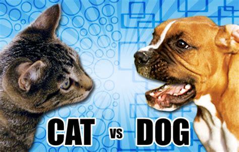 Psicolmascot Perro Vs Gato  ¿qué Mascota Es Mejor?