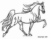 Coloring Pages Stacey Walker Horses Tennessee Arabian Mayer Horse Books Artwork sketch template