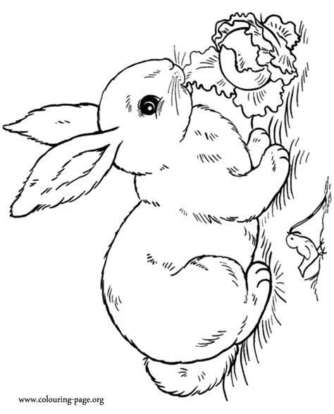 rabbits  bunnies  rabbit eating salad coloring page