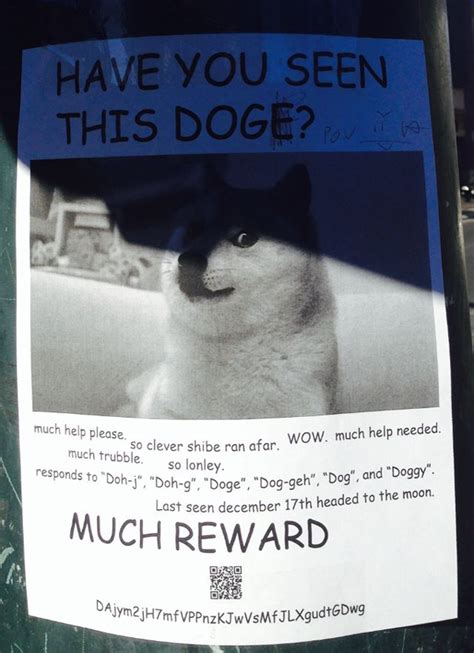 Lost Doge Meme - wow such luck the story of doge the internet s latest craze
