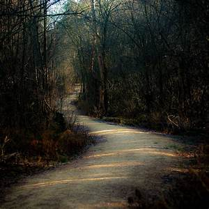 Sunlight, On, Forest, Path