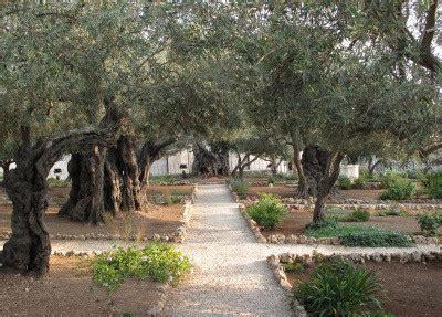 Garden Of Gethsemane Bible by Garden Of Gethsemane