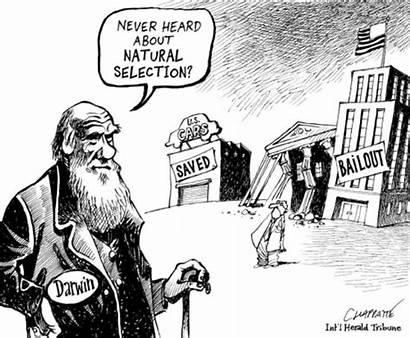 Selection Natural Capitalism Darwin Spencer Herbert Darwinism