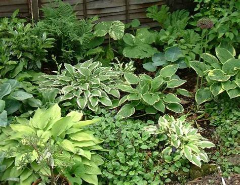 shade plants 100 natural hardwood mulch shade gardens