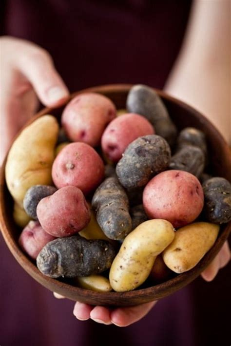 comment cuisiner les pommes de terre grenaille comment utiliser les différentes variétés de pommes de