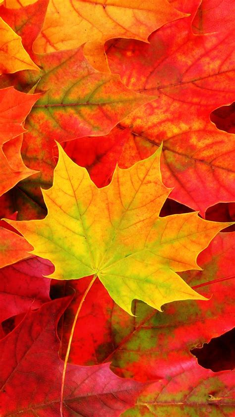 Fall Backgrounds For Iphone 11 by 28 Breath Taking And Most Beautiful Fall Wallpaper For