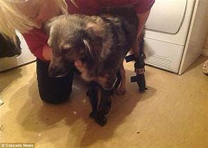 UPDATE: Glory the One-Legged Dog Gets Three Prosthetic Limbs