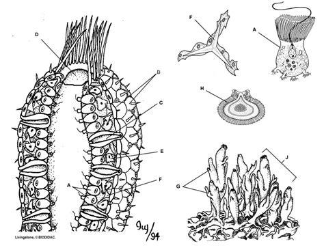 picture phylum porifera
