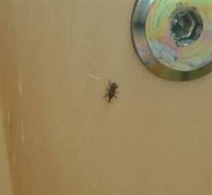 Mückennester In Der Wohnung : winziger k fer in der wohnung insekten klein winzig ~ Watch28wear.com Haus und Dekorationen