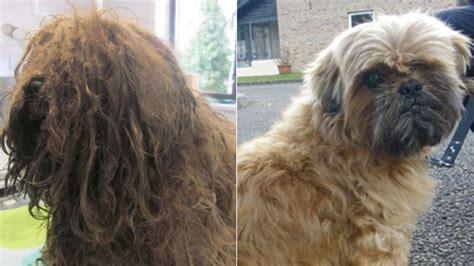 bournemouth vet struck   prolonged neglect