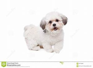 Kleiner Weißer Couchtisch : kleiner wei er hund stockbild bild von s ugetier studio 84418585 ~ Markanthonyermac.com Haus und Dekorationen