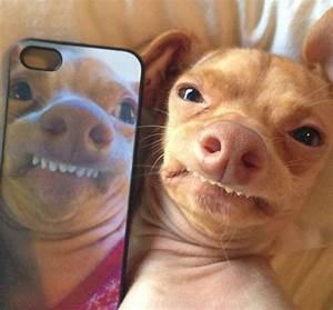 "The Most Adorable ""Ugly"" Dog Ever (23 pics) - Izismile.com"