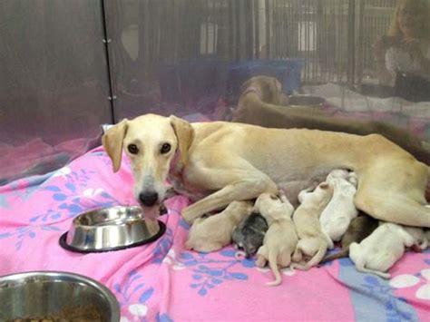 reproduction planning canadian veterinary hospital doha