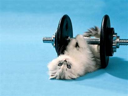 Funny Wallpapers Cats Cat Backgrounds Background Fun