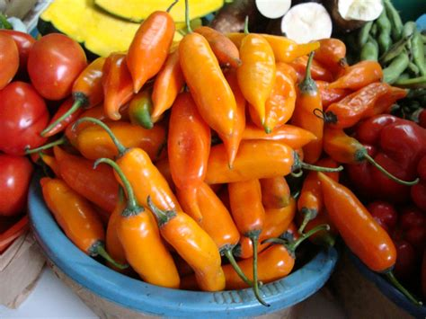 aji amarillo 13 ways to eat like a peruvian peru delights