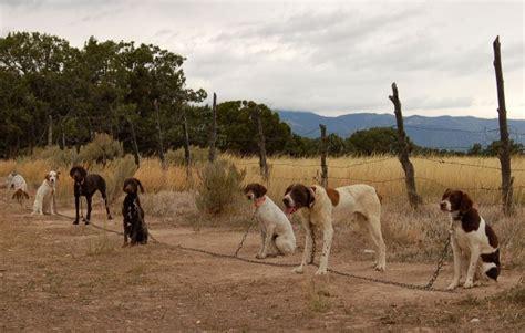 utah bird dog training  gun dogs
