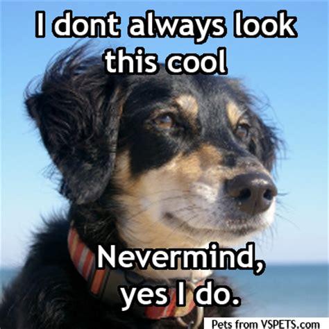 Pet Meme - pet memes vspets verseu blog