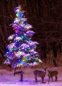 10, Natural, Outdoor, Christmas, Tree, Decorations