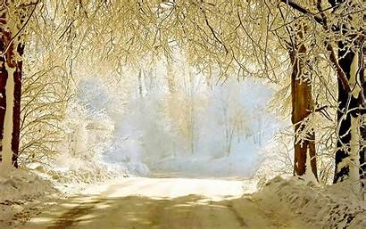 Winter Background Wallpapers Backgrounds Graphic Psd Source