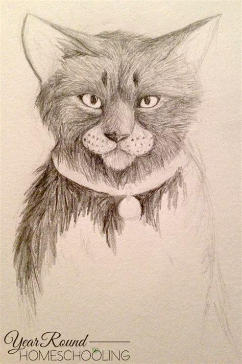 draw  cat  graphite pencils year