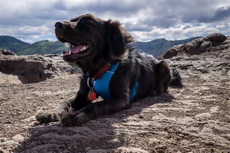 best hiking near me best hiking trails for dogs near me sabis bulldog athletics