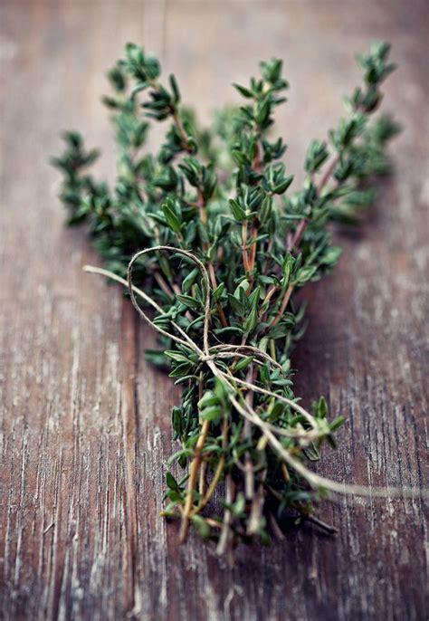 les herbes aromatiques en cuisine 17 meilleures idées à propos de herbes aromatiques sur