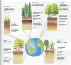 Different Types Soil