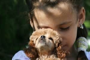 nonshedding dogs who are good with kids with pictures ehow